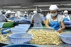 Vietnam cashew industry to face challenges in 2019