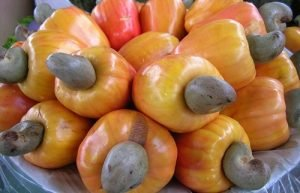 Lacking of high quality cashew nuts supply