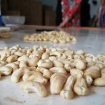 Reduce the target of cashew nut export in 2020 to 3.2 billion USD