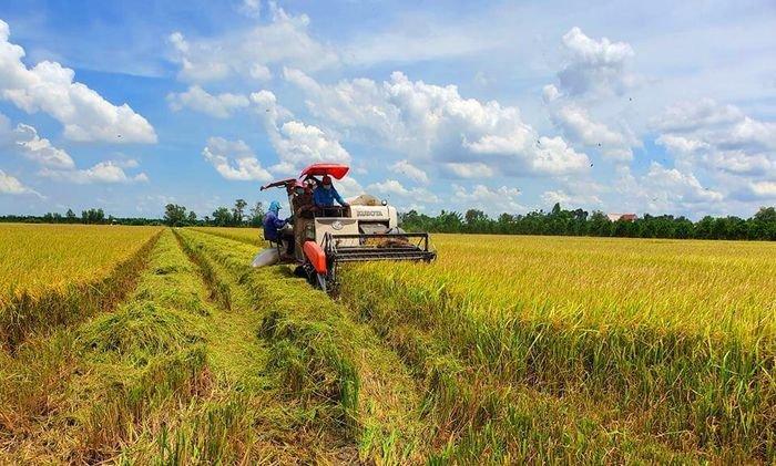 Harvesting rice in Mekong Delta